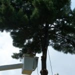 Tree Cabling and Bracing by Complete Tree Service