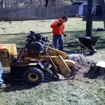 Stump Removal by Complete Tree Service