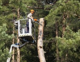 Complete Tree Service named by Expertise.com as a Top 20 Tree Service Provider and Featured on STL.News