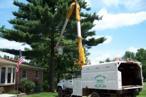 Complete Tree Service of St. Louis, LLC