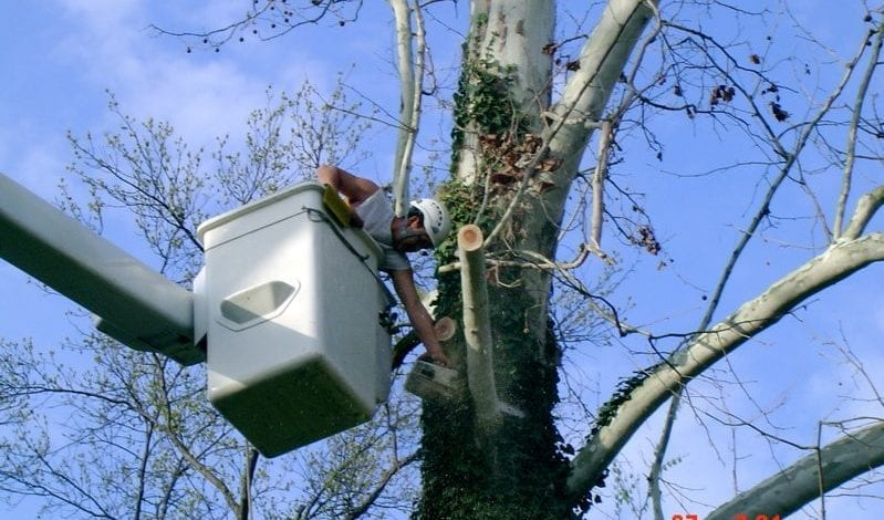 Tree Trimming Services offered by Complete Tree Service