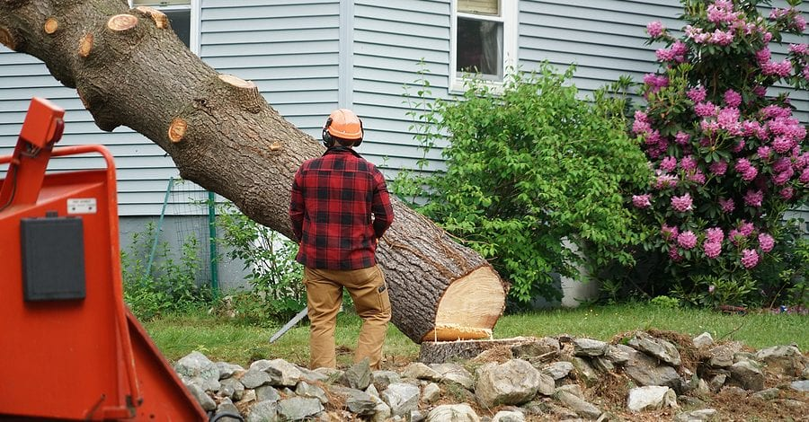 Tree Removal Services by Complete Tree Service