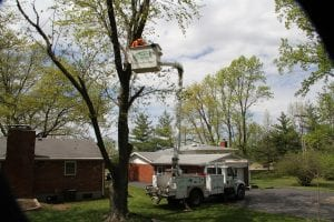 Compete Tree Service of St. Louis